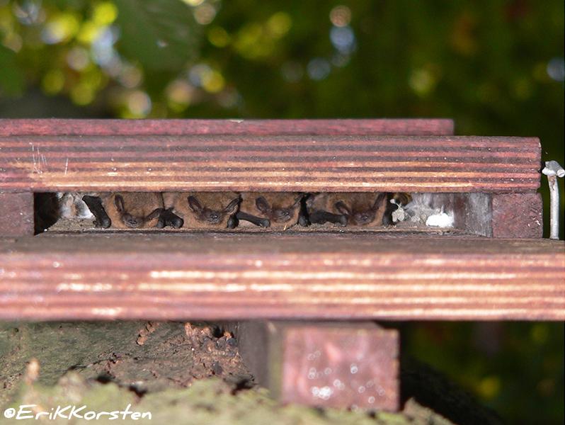 Kleine platte vleermuiskasten vleermuiskasten - Opslagoplossing kleine platte ...
